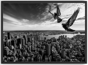 Pigeons on the Empire State Building Fotokonst
